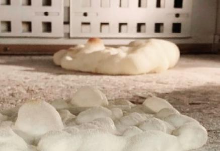 ピンサ・ロマーナの一次焼成中のオーブン